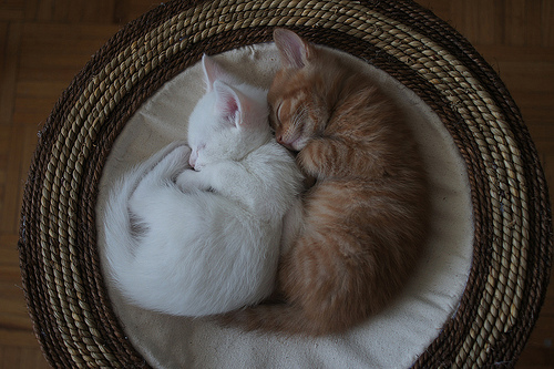 Cat-cats-white-red-shelter-cute-beautiful-cuddle-love-vintage-photo-photography-favim.com-461947_large