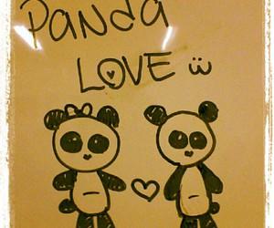 panda love bear cute