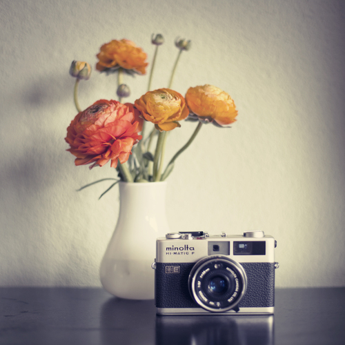 All sizes | Vintage Flowers | Flickr - Photo Sharing!