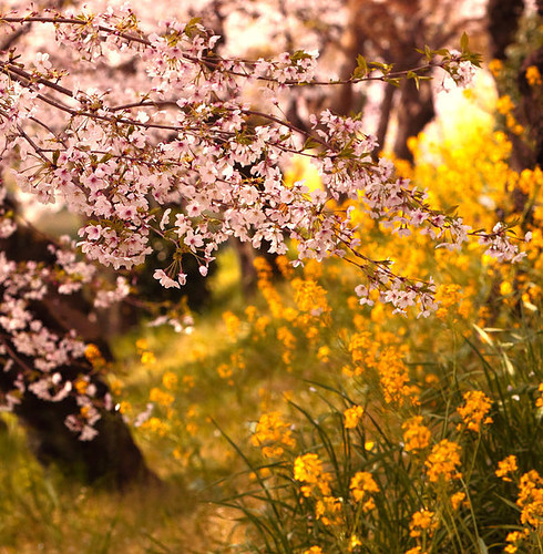 Blossoms_flowers_nature_pink_yellow_blossom-fe40a4fc471e3432a38e90dce6e39e93_h_large