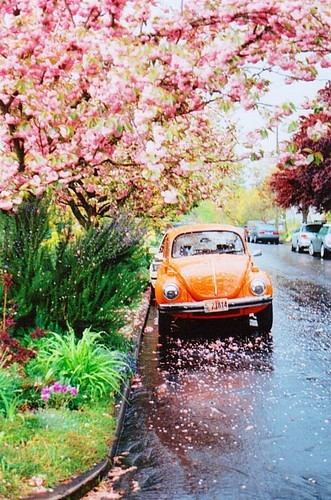 Punch buggy orange...no return! picture on VisualizeUs