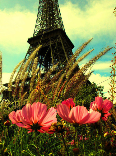 Future_paris_photography_paris_vintage_flowers_cityscape-937266ed560ccad3802cb4183c23ca9e_h_large_large