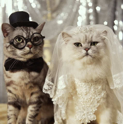 Cute_2bcat_2bwedding_2bkitten_2blolcat_2bfunny_2bbride_2bgroom_2bveil_2bglasses_large