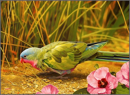 Bird_colorful_exotic_pets_animals-e84eb324ad25b55b69ed23c2aedf226f_h_large