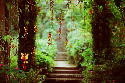http://data.whicdn.com/images/31541135/flower_stairs_blur_green_path_trees-810620c865b1ee3b33e9a10c2f2e2c65_h_large.jpg