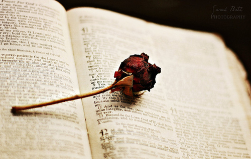 Book,Old,Rose,