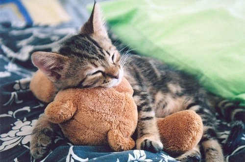 Cat-cute-kitten-favim.com-454731_large