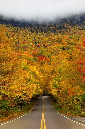 Autumn_tree_tunnel_252c_smuggler_2527s_notch_state_park_252c_vermont_large
