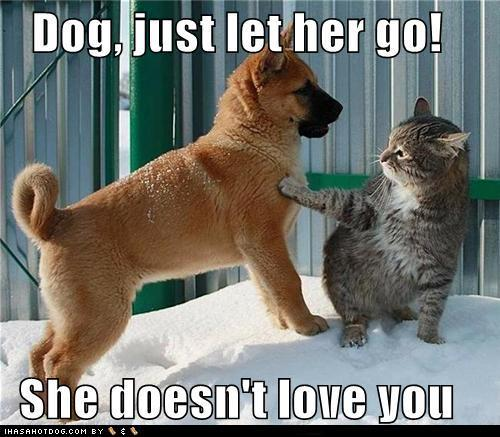 funny dog i love you pictures