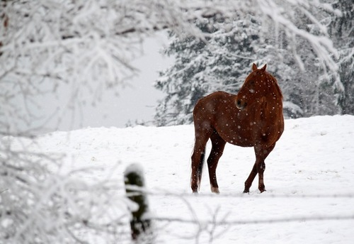 Ginger-horse-snow-winter-wonderland-favim.com-244161_large
