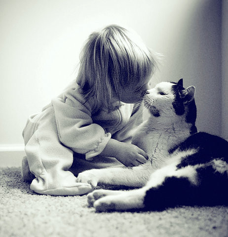 Children_kids_kiss_kitti_cat_love-f3b75a9528267b2b0f340b1ac7e9c5af_h_large