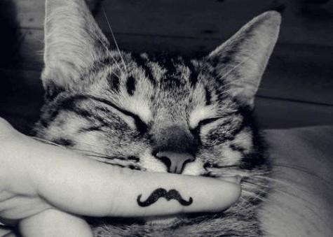 2012_07_cat-mustache-440416-475-339_large