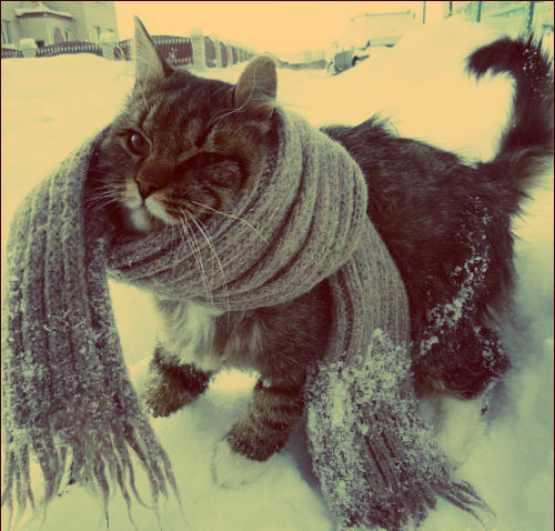Cat-cute-photography-scarf-snow-favim.com-457585_large