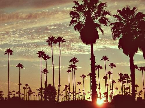 Summer-holiday-palm-palms-dark-favim.com-467140_large