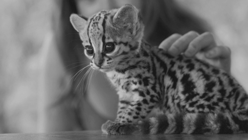 Beautiful-believe-black-and-white-cute-favim.com-457632_large