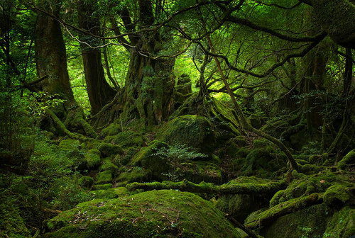 Green_forest_by_crazmo4sho_large