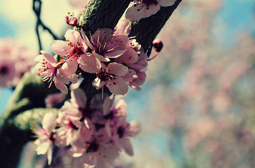bend blossoms II | Flickr - Photo Sharing!