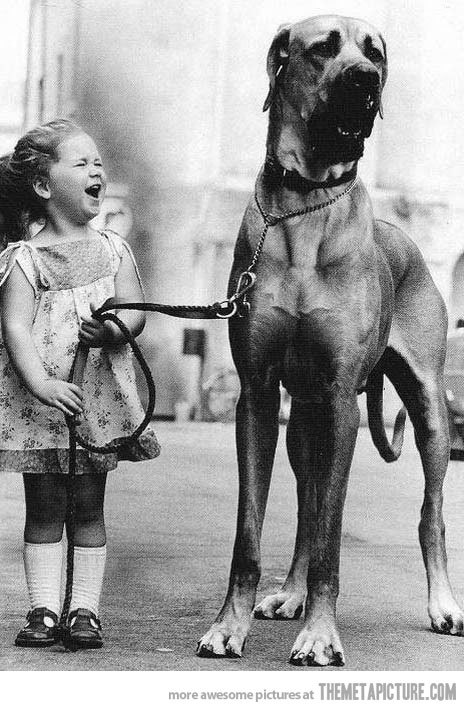 Funny-little-girl-big-dog_large