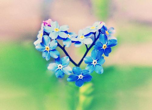 Blue-flower-heart-love-facebook-timeline-cover_1990x1440_66250_large
