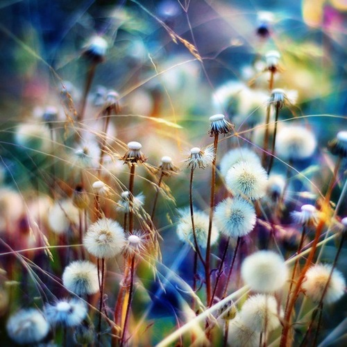 Colorful-daisy-fluffly-photography-pretty-favim.com-459131_large