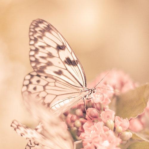 Resultado de imagem para butterfly tumblr
