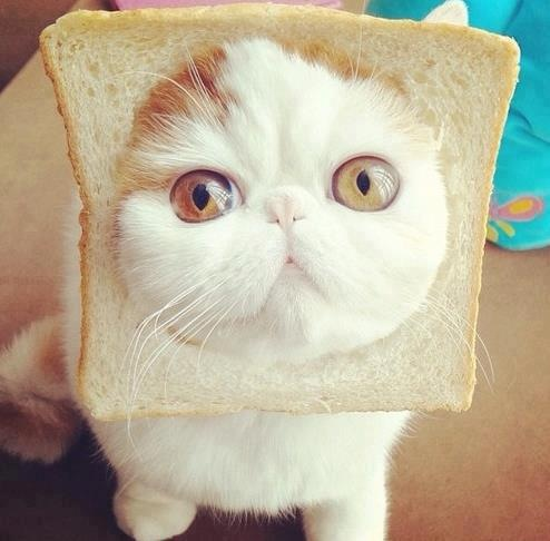 http://data.whicdn.com/images/33270022/bread-cat_large.png