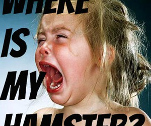 where is my hamster