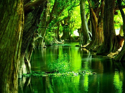 Ilikeit_imagination_insprational_nature_green_swamp-87923b7a723860e0981385b3caf175f1_h_large