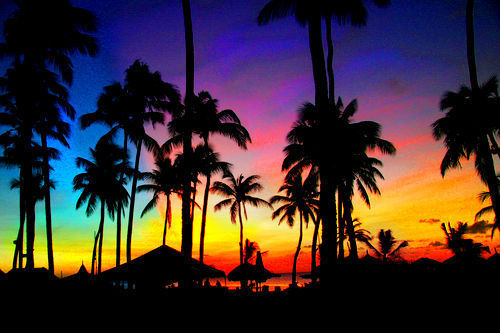 Summer-holiday-palm-palms-dark-night-shadow-sky-color-colored-country-nature-beautiful-amazing-photo-photography-favim.com-463024_large_large