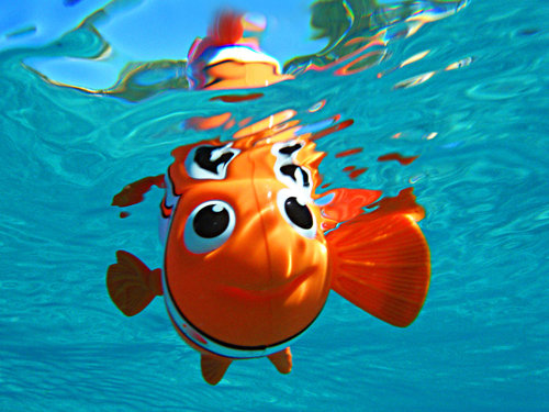 Findin_nemo_by_sublimebudd_large
