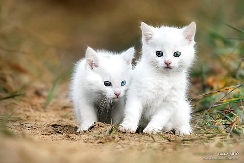 Animal_cute_bro_buddy_cat_couple-772fe8da788b297f3c51c505acf98396_h_large