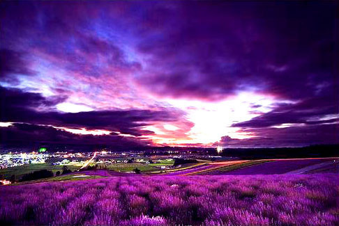 Purple,Landscape