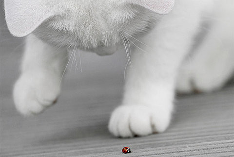 no description, cat, bug uploaded by hamad picture on VisualizeUs