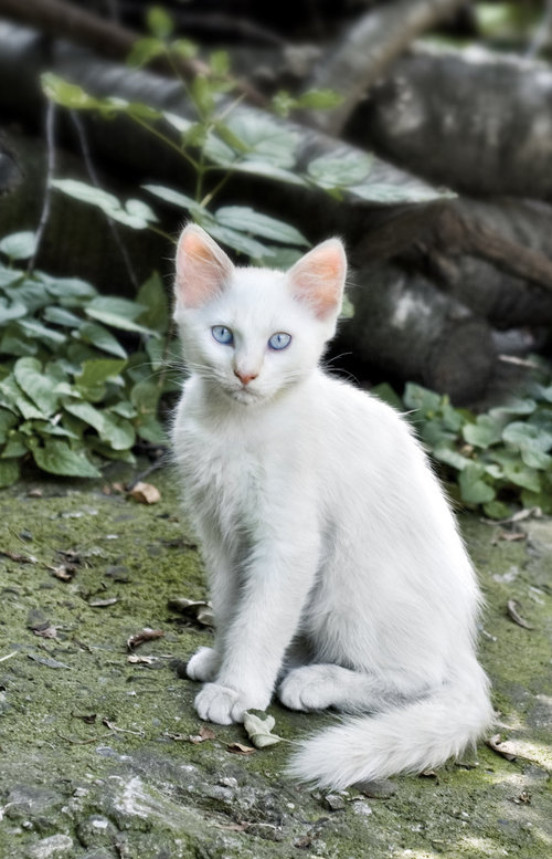 White cat by chriissis large White cat by ~chriissis