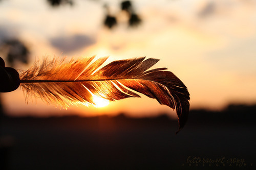 feather | Tumblr