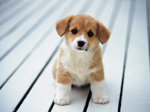 30 cute puppies you will want to take home with you 27 large 30 Cute Puppies Youll Want To Take Home With You   SparkyHub