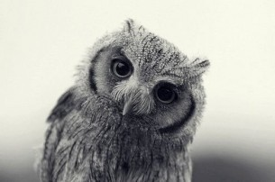 2012 08 owl a347260e2 493126 305 202 large Piccsy :: Popular Piccs