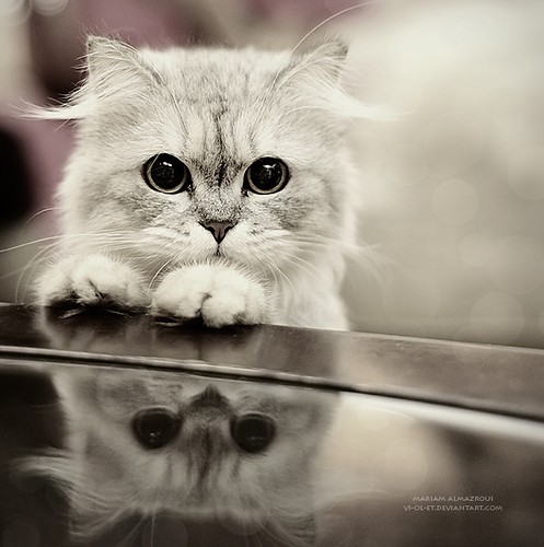 Cat,cute,animals,black,white,cats,photography-11308742395786d2409635966f8ea564_h_large