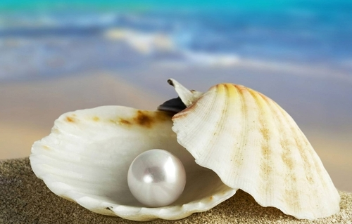 shell, pearl, marco, sea - inspiring picture on Favim.com