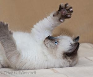 cat cute fun