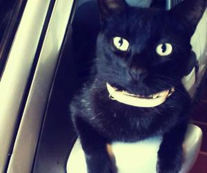 cat black car