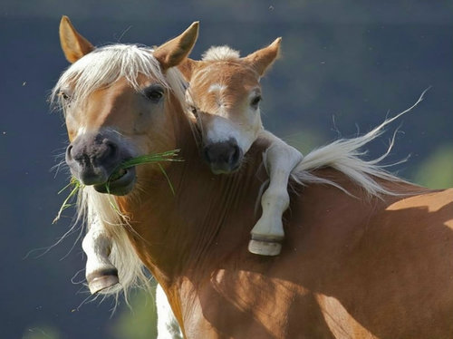 Give-your-mom-a-hug-pony-wants-piggyback-ride-from-mom_large