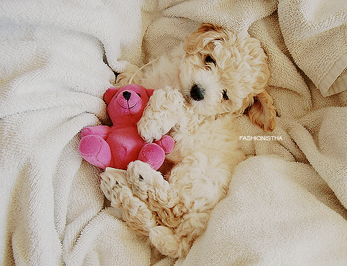 Cute-dog-funny-lovely-puppy-favim.com-113387_large