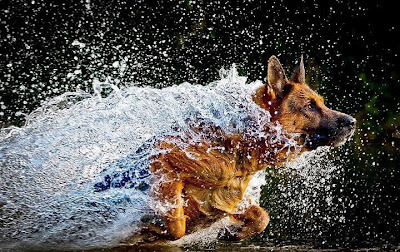 Dog-running-through-water_large