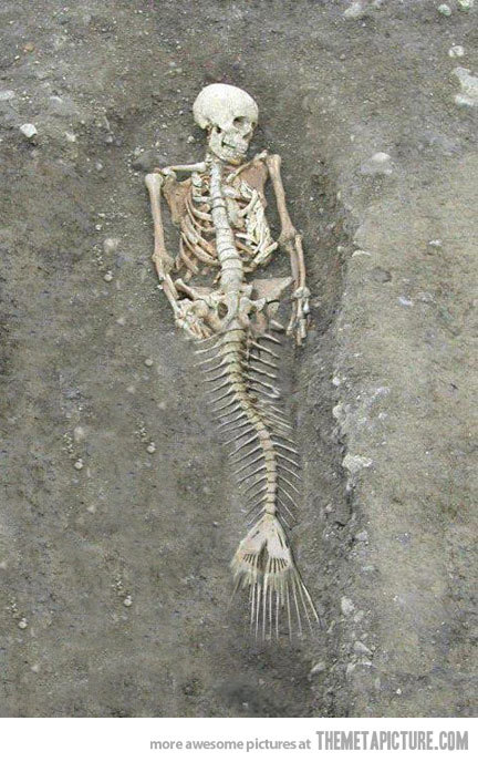 Mermaids Real Pics Mermaid Real Life Bones