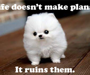 Images of cute animals with quotes - photo#21