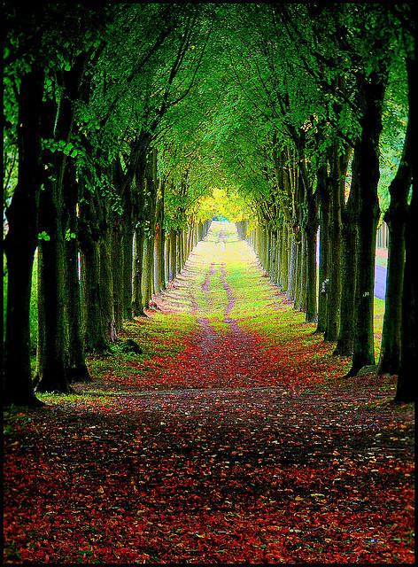 Allee am Schloß Wilhelmstal. Calden | Flickr – Compartilhamento de fotos!