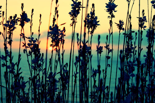 Summer_memories_by_naniny-d37zpvb1_large