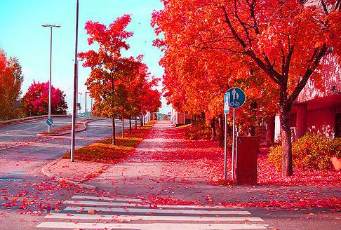 Color_nature_red_colour_photographic_orangel-bca9be13082d63035d13e2fec44da246_h_large