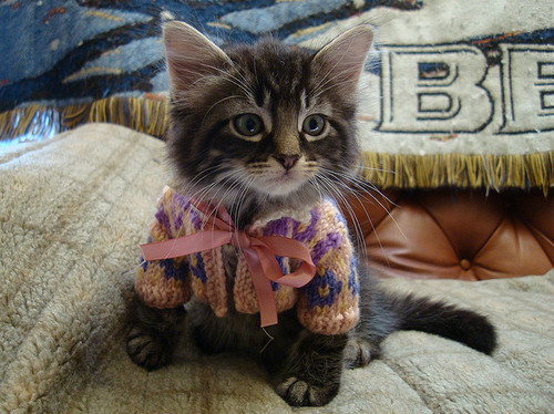 tumblr m9zmnf30wH1r3a6jho1 500 large LittlePawz   Kitty fashions: all she needs is a matching bonnet...
